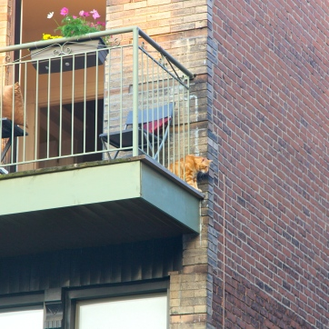 balcony cat