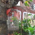 birds near a wiresmall