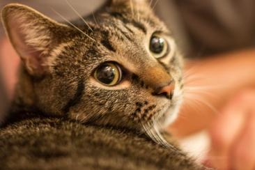 2013 xmas - glamour cat
