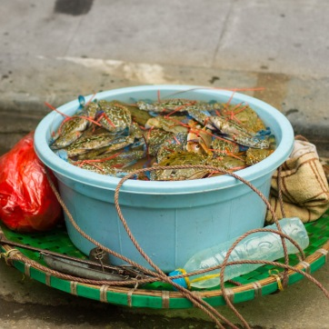 crabs lowres