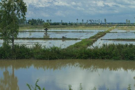 rice grid