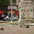 dog corner