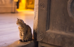 the guardian of aya sofya