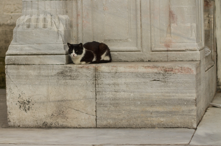 the guardian of the blue mosque